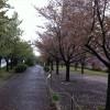 【リトライ東京 ハーフ&10km】僕の結果。初めての雨天レース。