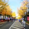 「横浜マラソン」 3万人規模のフルマラソン化へ