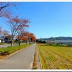 11/22の練習 完全休養 ; 「ジュビロ磐田メモリアルマラソン」に備えます!