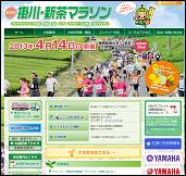 kakegawa-shincha-20131118_01