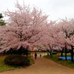 【今日の練習】3/24「2014板橋Cityマラソン」翌日なのでダメージ確認+疲労回復促進の75分jog!
