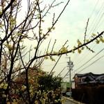 【今日の練習】3/4 150分朝イチjog + 60分夜jog