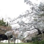 【第5回穂の国・豊橋ハーフマラソン】前日 大会会場の豊橋公園に行ってきた。