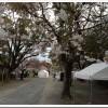 【第5回穂の国・豊橋ハーフマラソン】当日 雨降ってきた!でも予定通り開催!