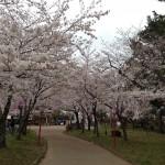 【今日の練習】3/29 モチベーションアップのため「穂の国・豊橋ハーフ」の前日下見!