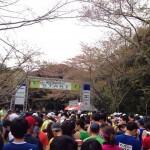 【第9回掛川・新茶マラソン】まもなくスタートです!