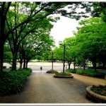【マラソントレーンング in 庄内緑地公園 vol.13、14】エントリー完了!夏場のモーニングラン!