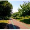 【今日の練習】5/11「Cheekマラソン大会 NAGOYAスマイルマラソンvol.8」(10kmの部)34分46秒!