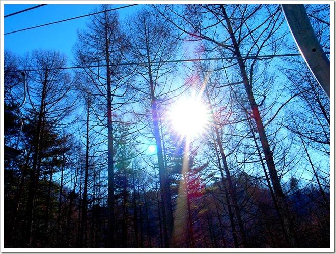 森林 日の光