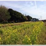 【マラソントレーニング in 庄内緑地公園 vol.13】参加案内が来た!目標は10km34分台。