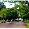 【今日の練習】7/12「マラソントレーニング in 庄内緑地公園 vol.13」+ 8.9km jog!