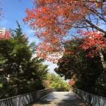 【昨日の練習】11/25 雨のせいで完全休養!