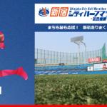 【新宿シティハーフマラソン 2015】 松本翔選手と鈴木莉紗さんの結果