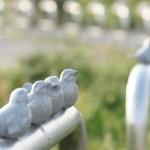 【男子第69回兵庫県郡市区対抗駅伝】大会結果・区間記録を掲載。
