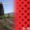 【菅平スカイライン トレイルラン2015】結果・順位・完走率。松本翔も出場