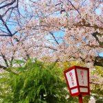 【宍道湖一周駅伝 2017】結果・速報・区間記録(リザルト)